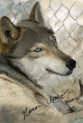 Wolf by Nirvana87