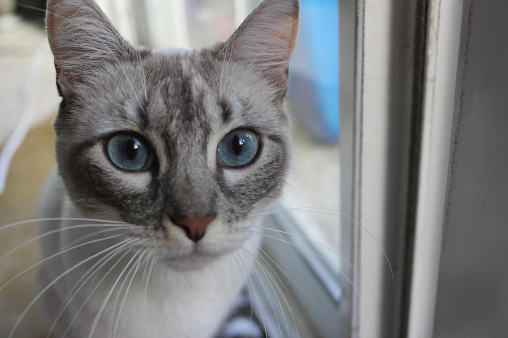 Kitty Cat by sunnyraina4