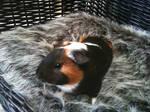 worlds cutest animal