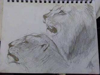 Lion pencil Drawing by Darktaru