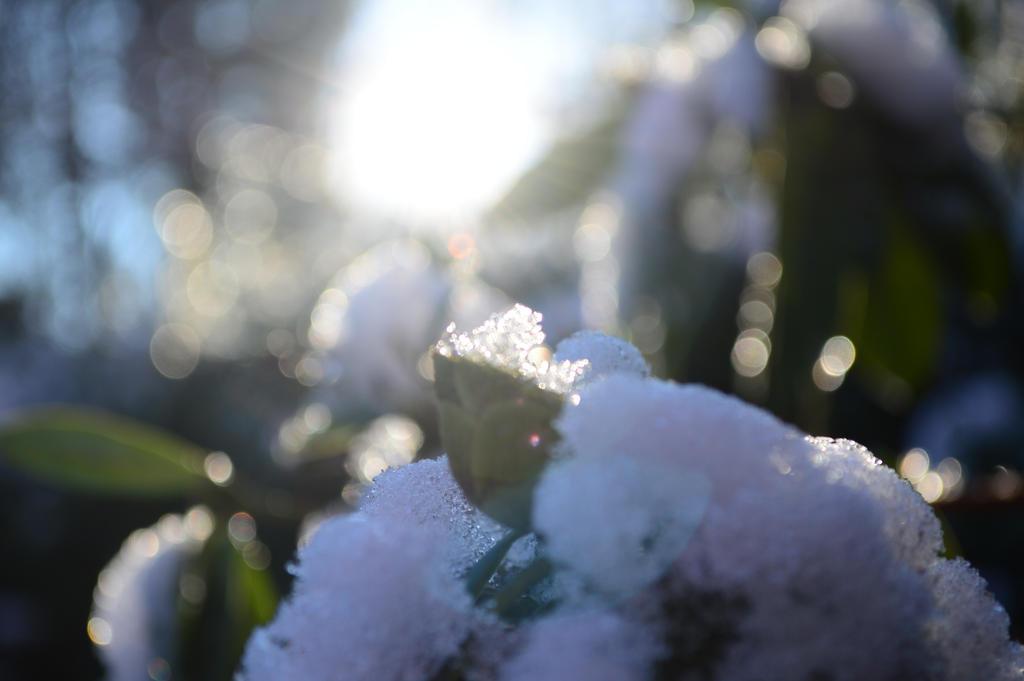 Snow by Bladenight91