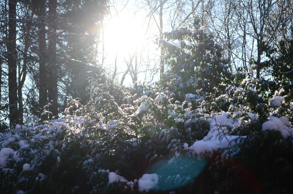 Winter is here by Bladenight91