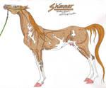 Shimmer 01