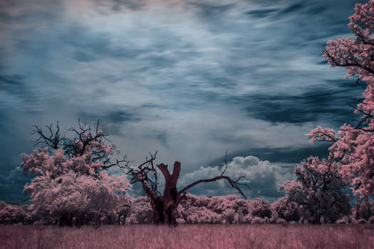 IR landscape 2