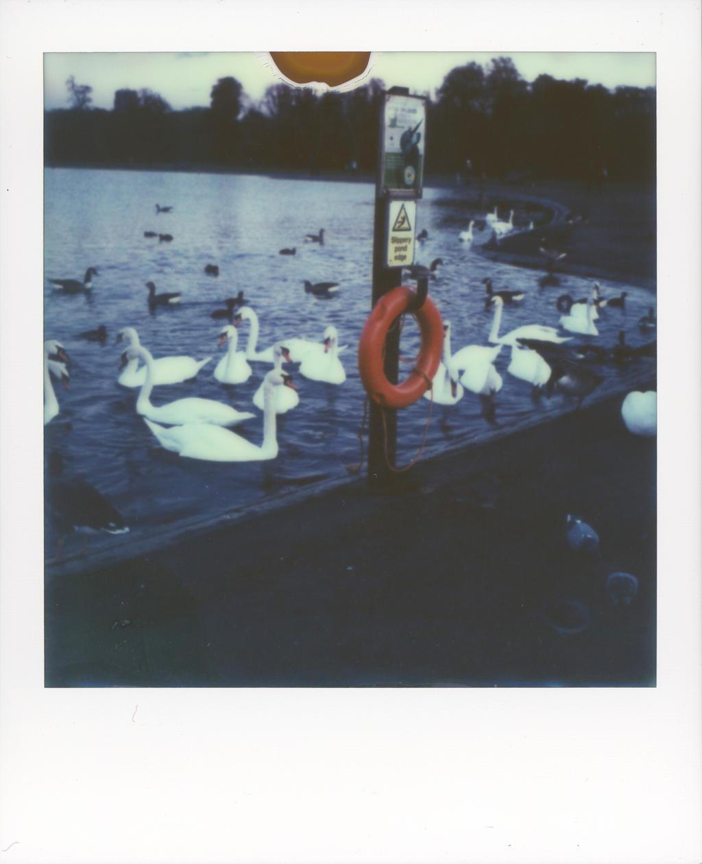 Hyde Park by Robin-Bervini