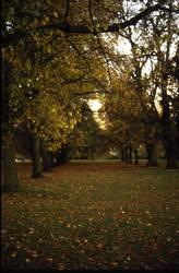 London, Hyde Park by Robin-Bervini