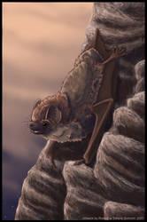 Bat Evening by Sikaris