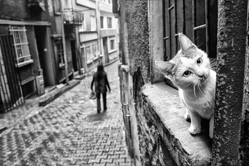 evsiz kediler sokagl, by enderefe