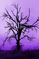 Purple Fluff by CelixDog04