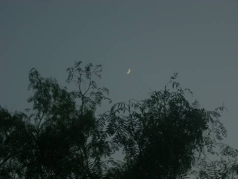 Moon And Mesquite