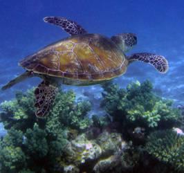 Reef by Ebonenee