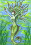 Spiderwick Caribbean Mermaid