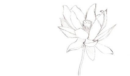 Lotus by NightOfNights
