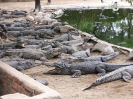More Crocodiles by celebrus