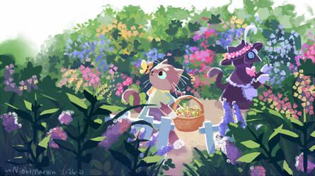 Lentil in the garden