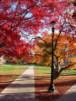 autumn. by kneesocks