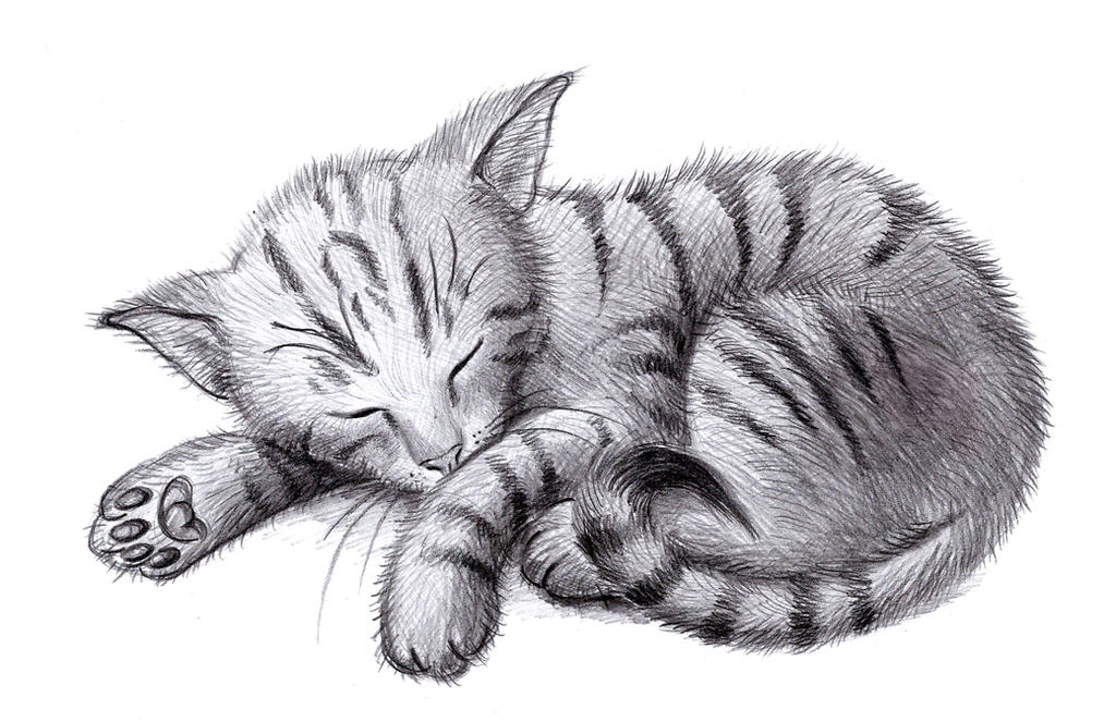 Sleeping Cat by zdrer456