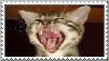 Stamp: LOLCAT Fan by screampeace