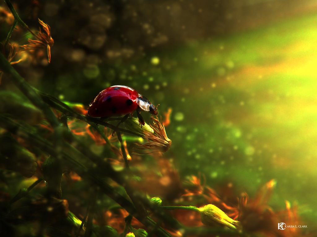 Ladybug by Karisa-L-Clark