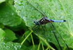 Blue Sky Dragonfly by Karisa-L-Clark