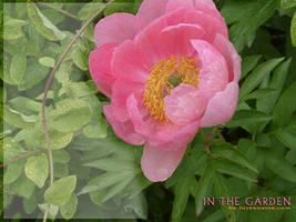 In The Garden - Pink