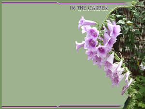 In The Garden - Purple