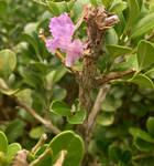 Petal in a bush