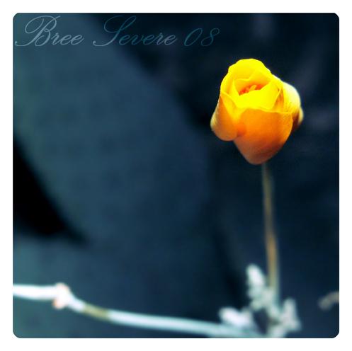 Yellow Muscle by LovelyShrew