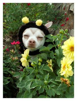 Bee Dog II