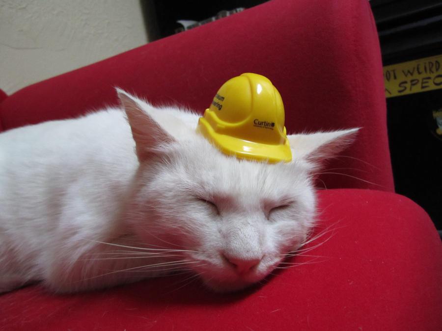 Cat on Work Break