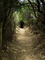 Bush Tunnel to the Beach by Galato901