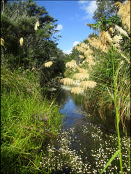 Butterfly Creek (Eastbourne New Zealand)