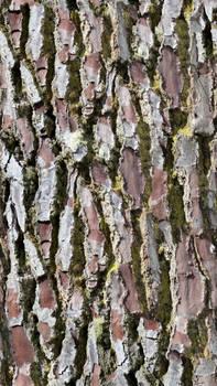 Pine Tree Trunk - Deep Grooves (Seamless Texture)