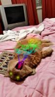Rainbow Cat Breath