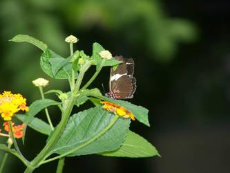 Butterfly by underscore12