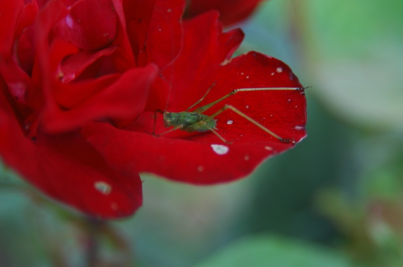 Green on Red by nullwert