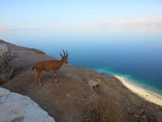 Dead Sea by Wannabby