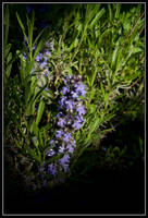 Flowers by korenwolf