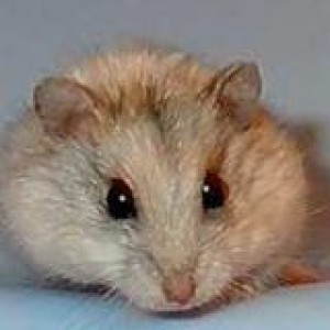 korenwolf's Profile Picture