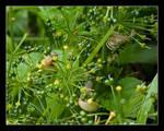 Garlic snails