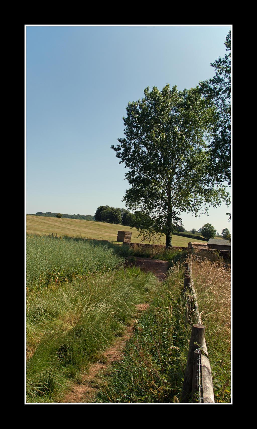 Somerset in Summer