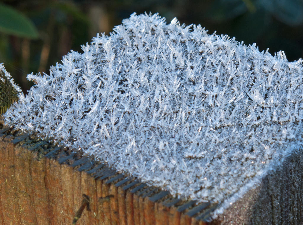Frost 20131229-1