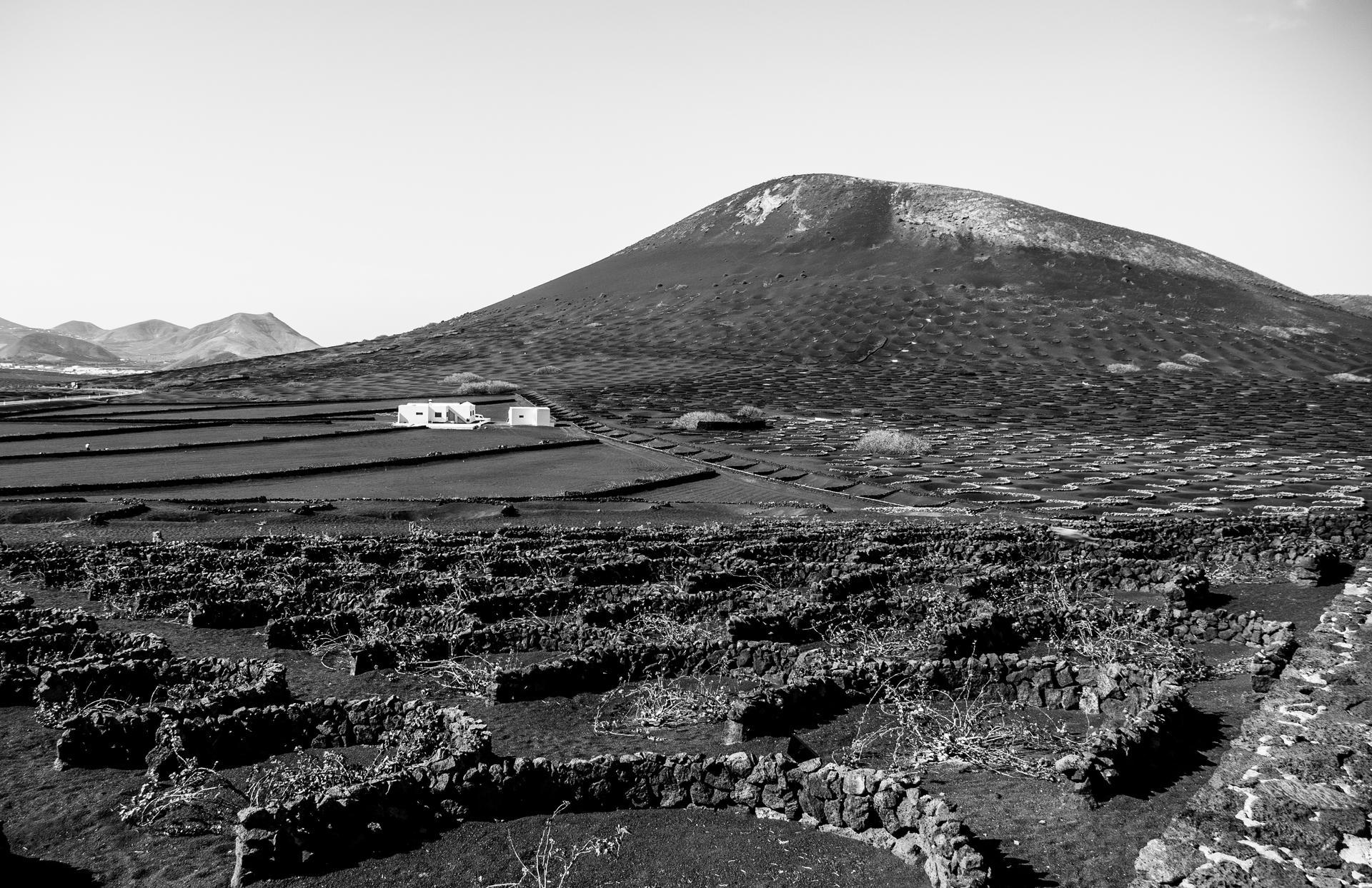 Lanzarote - Vinyard