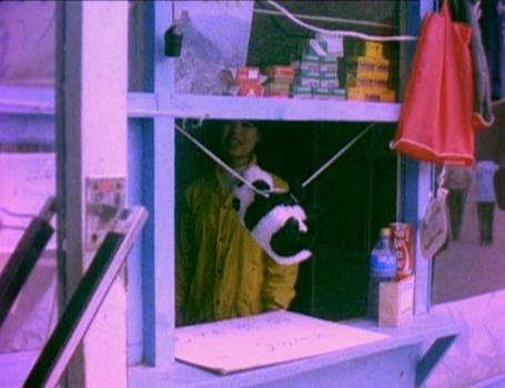 Panda suspended