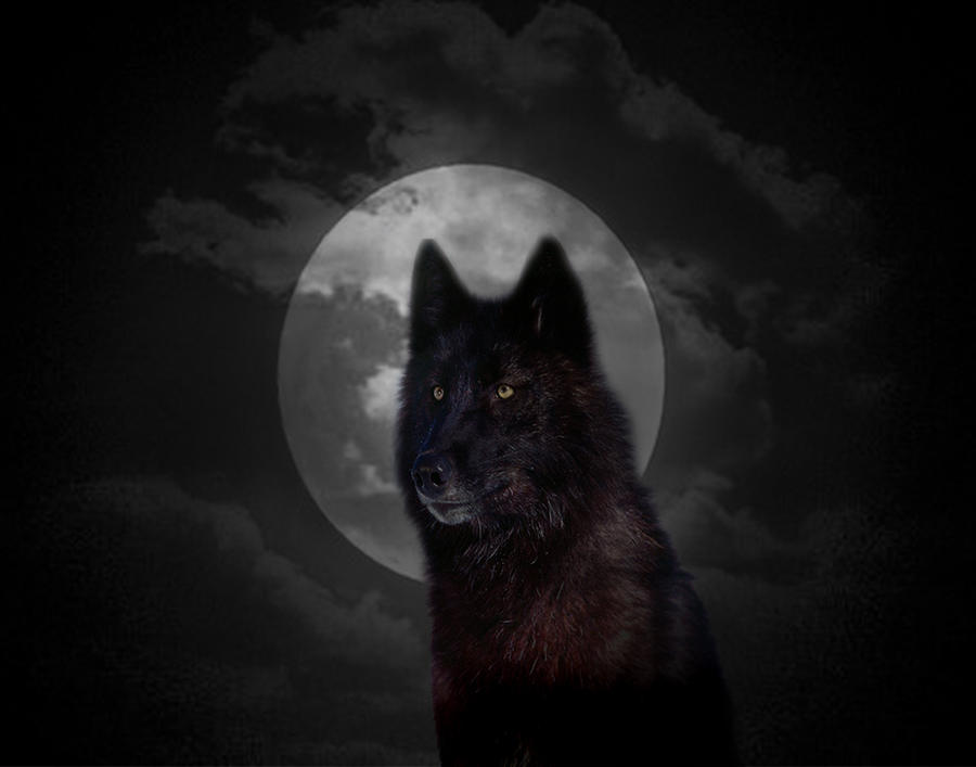 Dark Moon Wolf | www.pixshark.com - Images Galleries With ...