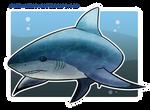 Shark Week: Bull Shark