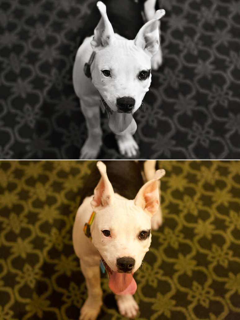 Petey before/after by KateIndeed