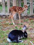Deer and Rabbit stock