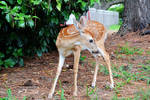 Fawn Stock image 3