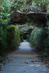 Enchanted Path Stock